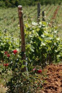 bulgaarse wijn