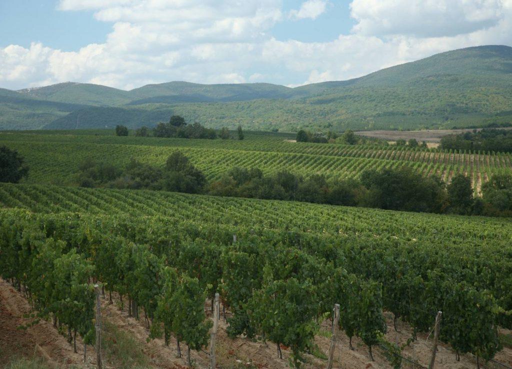 Bulgaarse wijngaarden