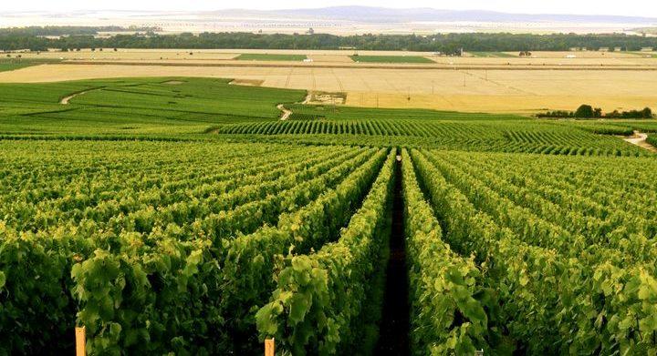 Zagreus wijngaarden